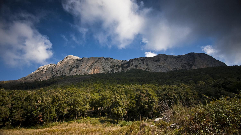 Tra boschi secolari, miele di Ape Nera Sicula e Olio di Crasto
