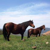 treking-a-cavallo-1
